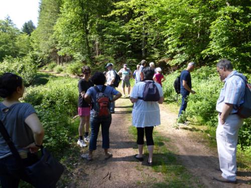 Frühjahrswanderung des RSB Rhein-Neckar am 4.6.2015, Foto: Avanti²
